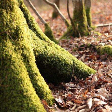 foam, tree, trunk, Canon EOS 70D
