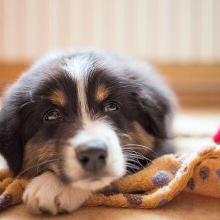 puppy, dog, dreamy, Canon EOS 6D
