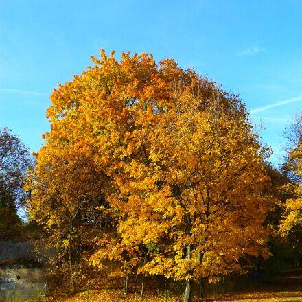 foliage, autumn, autumn gold, Samsung GT-S5611
