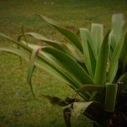 garden, green, leaves, plant, Nikon COOLPIX A300