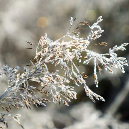winter, snow, frost, Fujifilm FinePix HS25EXR