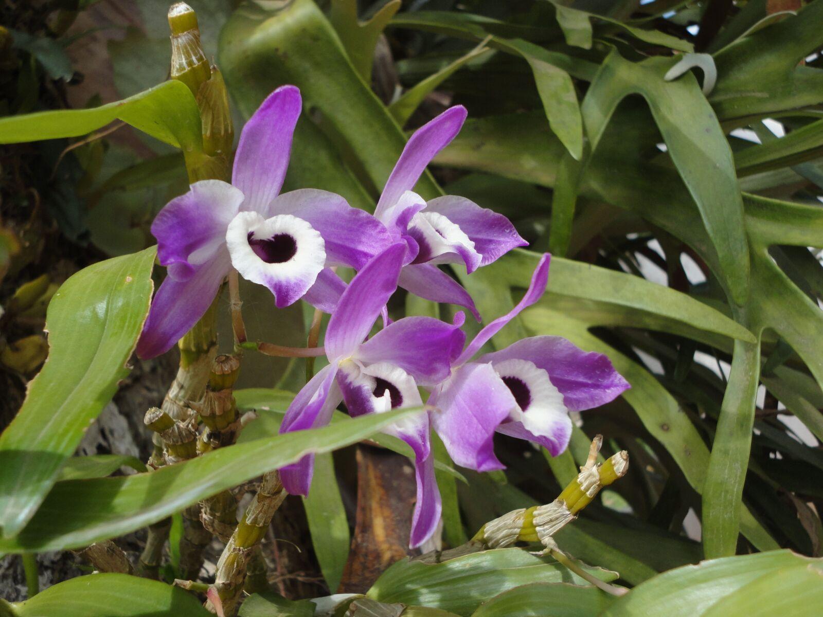 "Sony DSC-W350 sample photo. ""Orchid, purple, flowers"" photography"