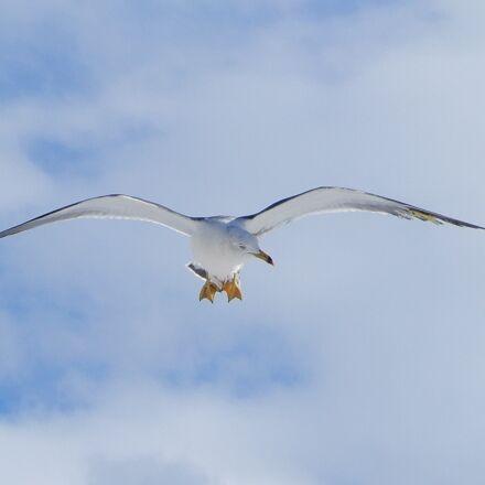 animal, sky, cloud, Nikon COOLPIX A900