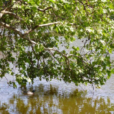 lake, nature, tree, Panasonic DMC-FS16