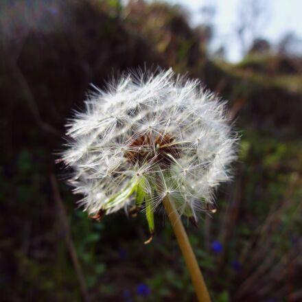 macro, plant, flower, Sony DSC-WX150