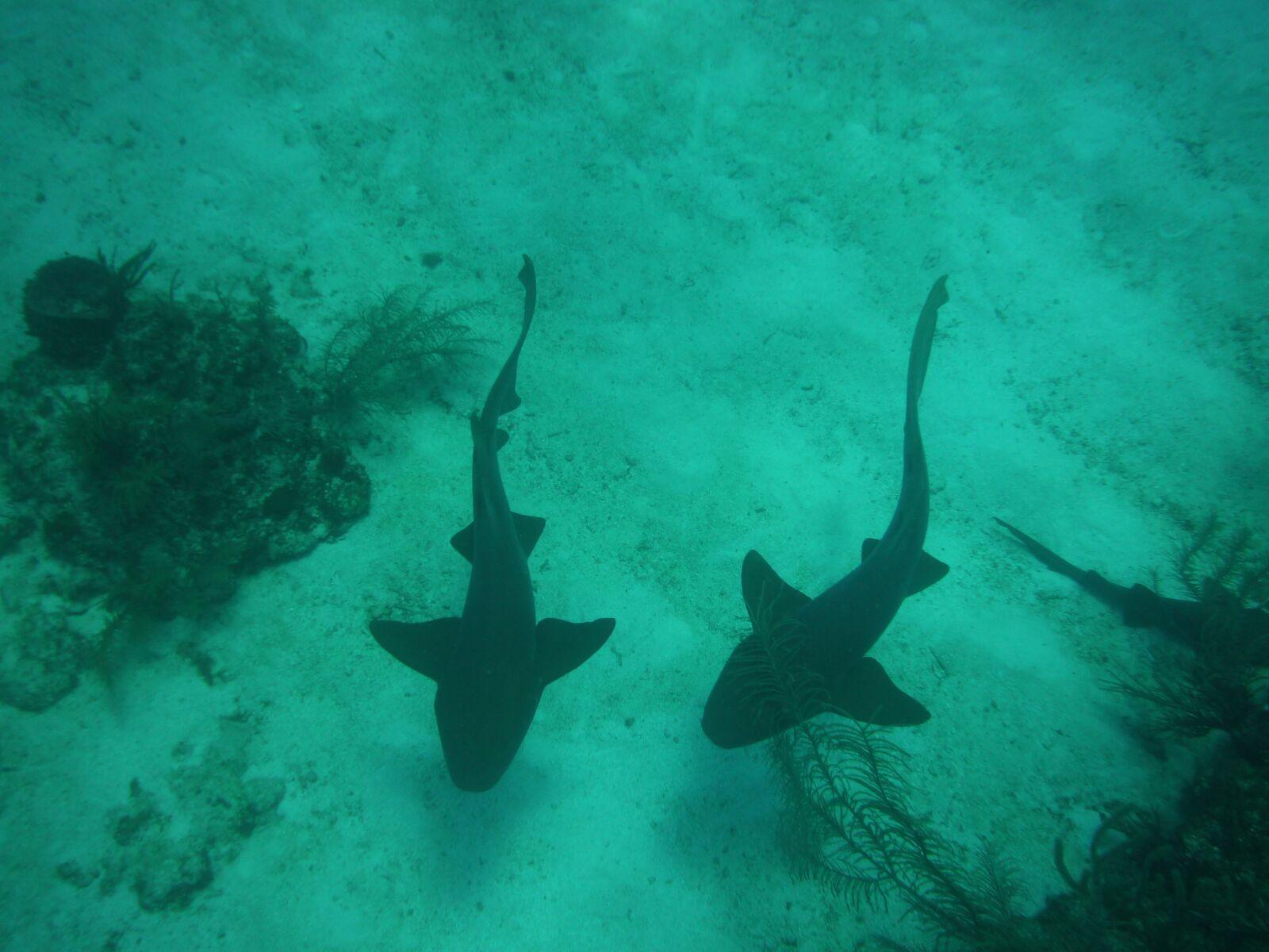 sharks, sand bank, scuba