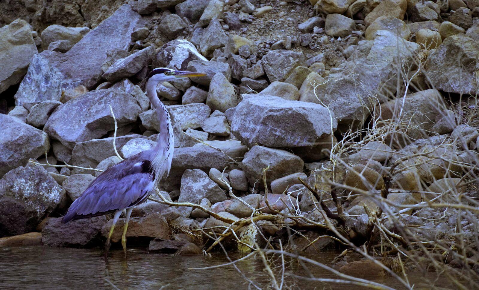 "Sony a6400 sample photo. ""Wildlife, bird, nature"" photography"