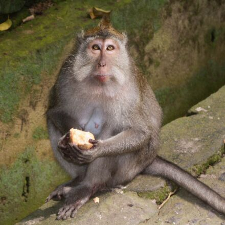 monkey, animals, look, Canon EOS 1000D
