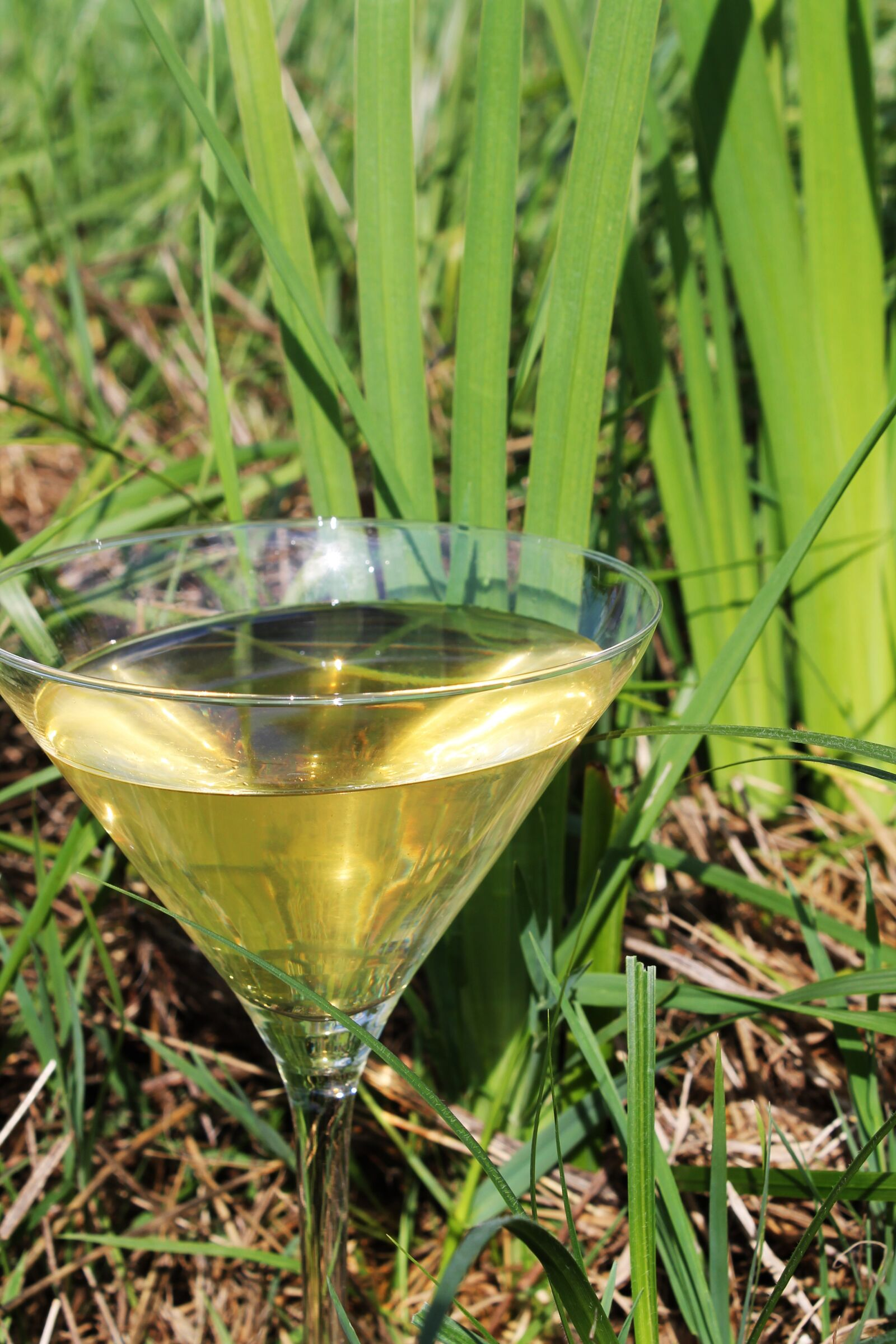 """Canon EOS 1100D (EOS Rebel T3 / EOS Kiss X50) sample photo. """"Cocktail, alcohol, nature"""" photography"""