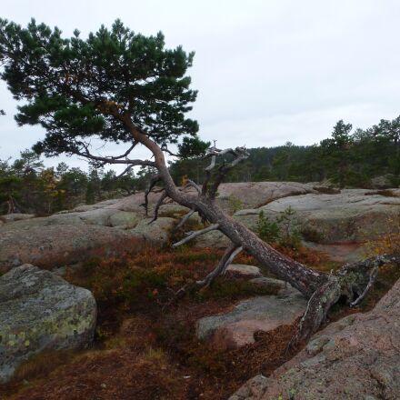 skuleskogen national park, sweden, Panasonic DMC-TZ18