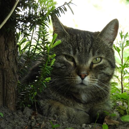 cat, shadow, relax, Nikon COOLPIX B700