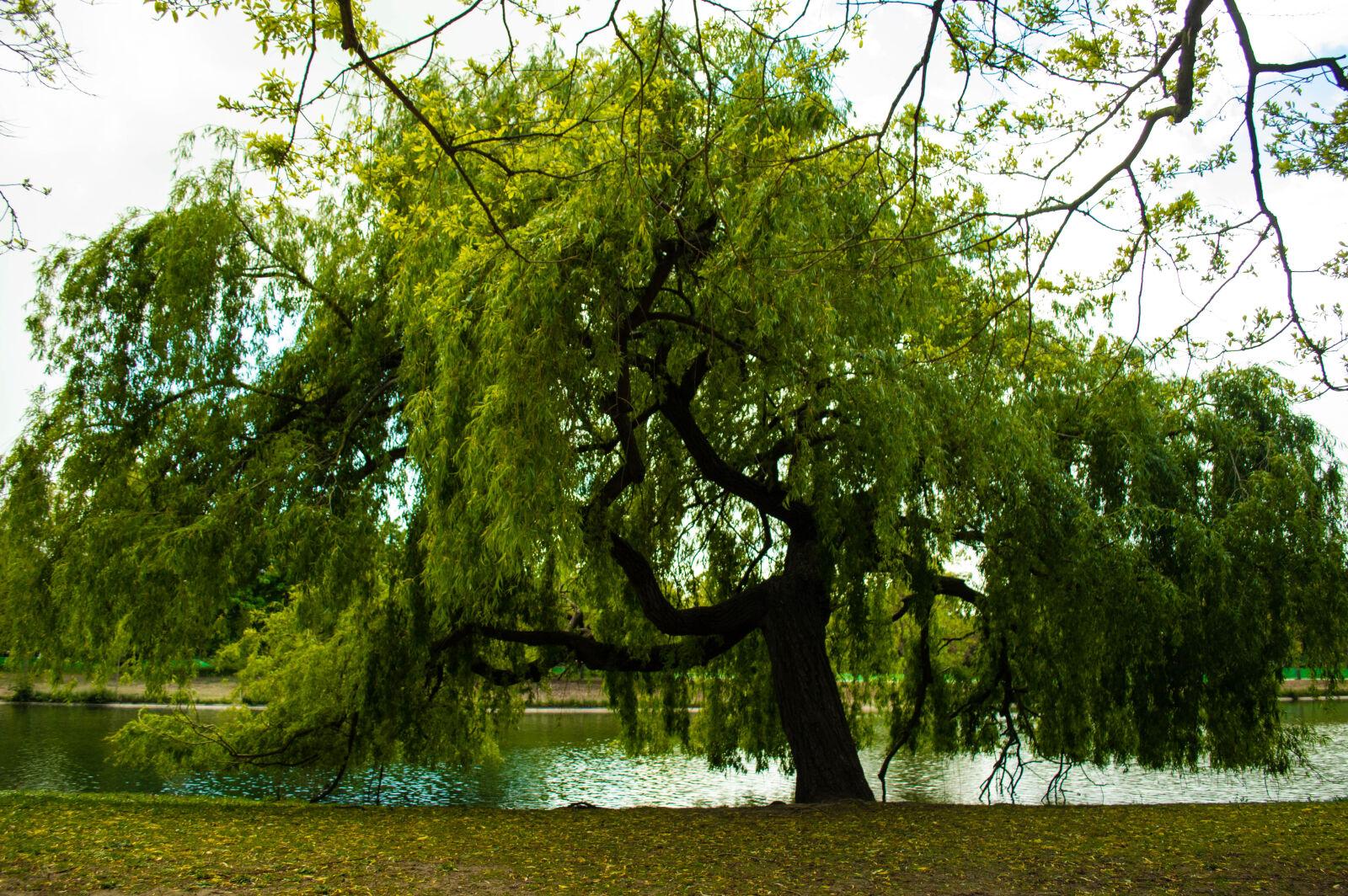 "Nikon D3200 sample photo. ""Tree"" photography"