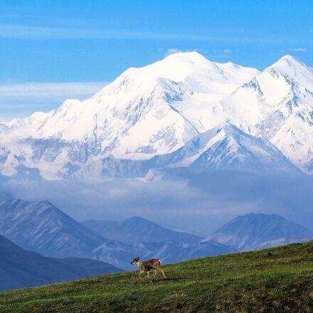 caribou, mountain, snow, Canon EOS REBEL T2I