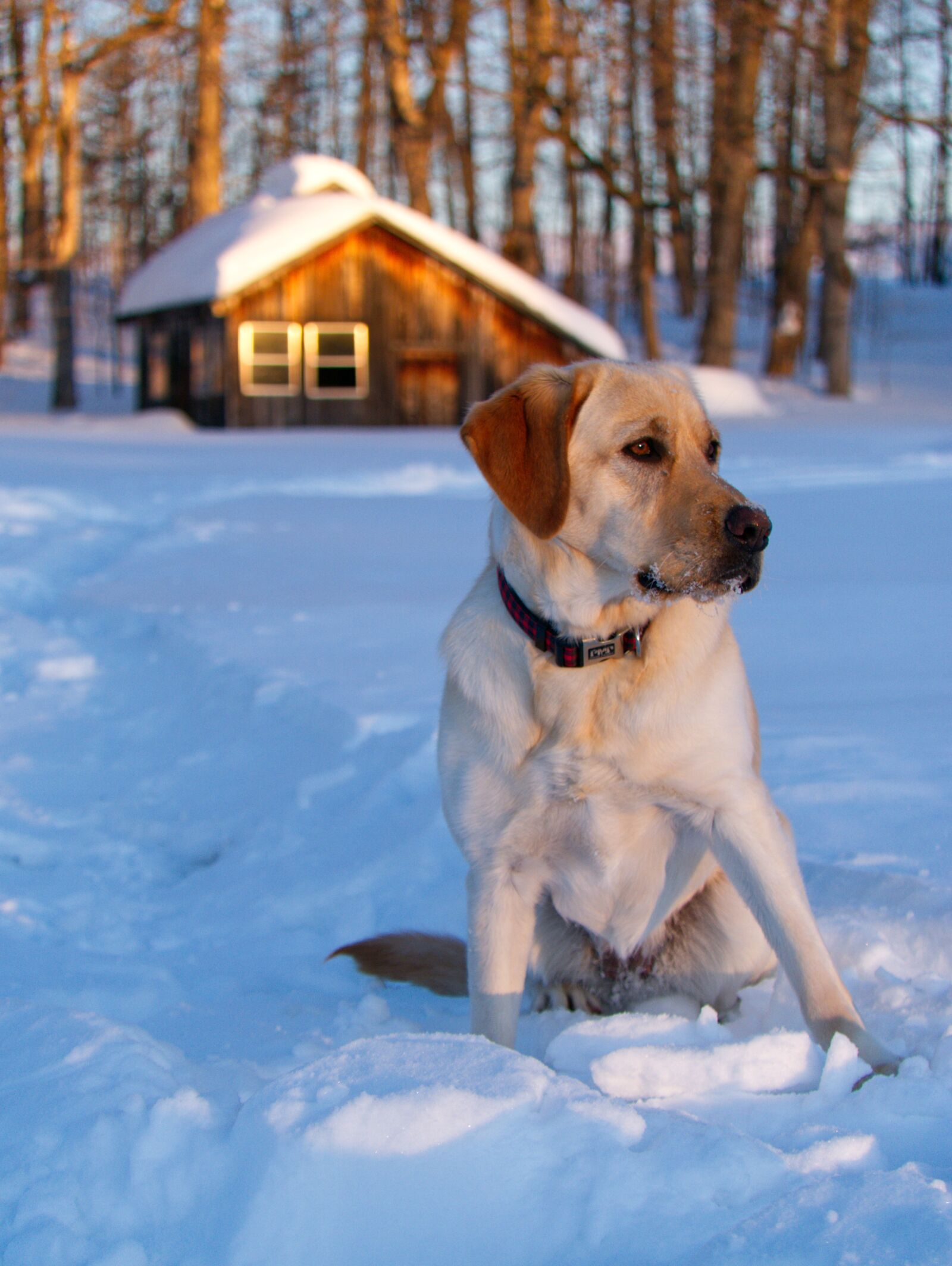 dog, snow, winter