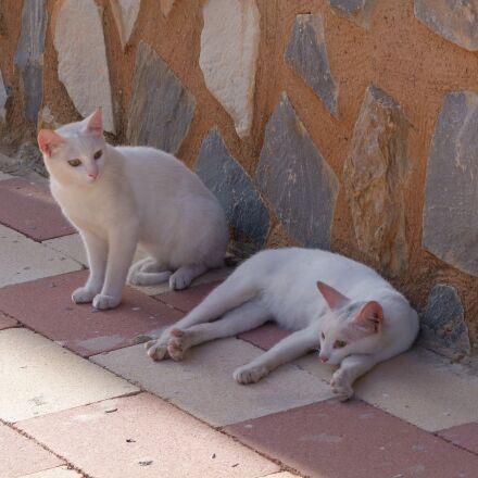 cat, white cats, strays, Fujifilm FinePix S100FS