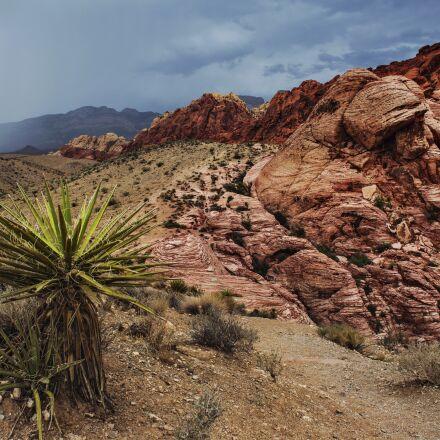 arid, barren, bushes, Canon EOS 6D