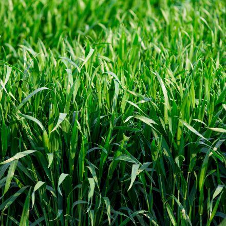 neck, green grass, the, Canon EOS 6D