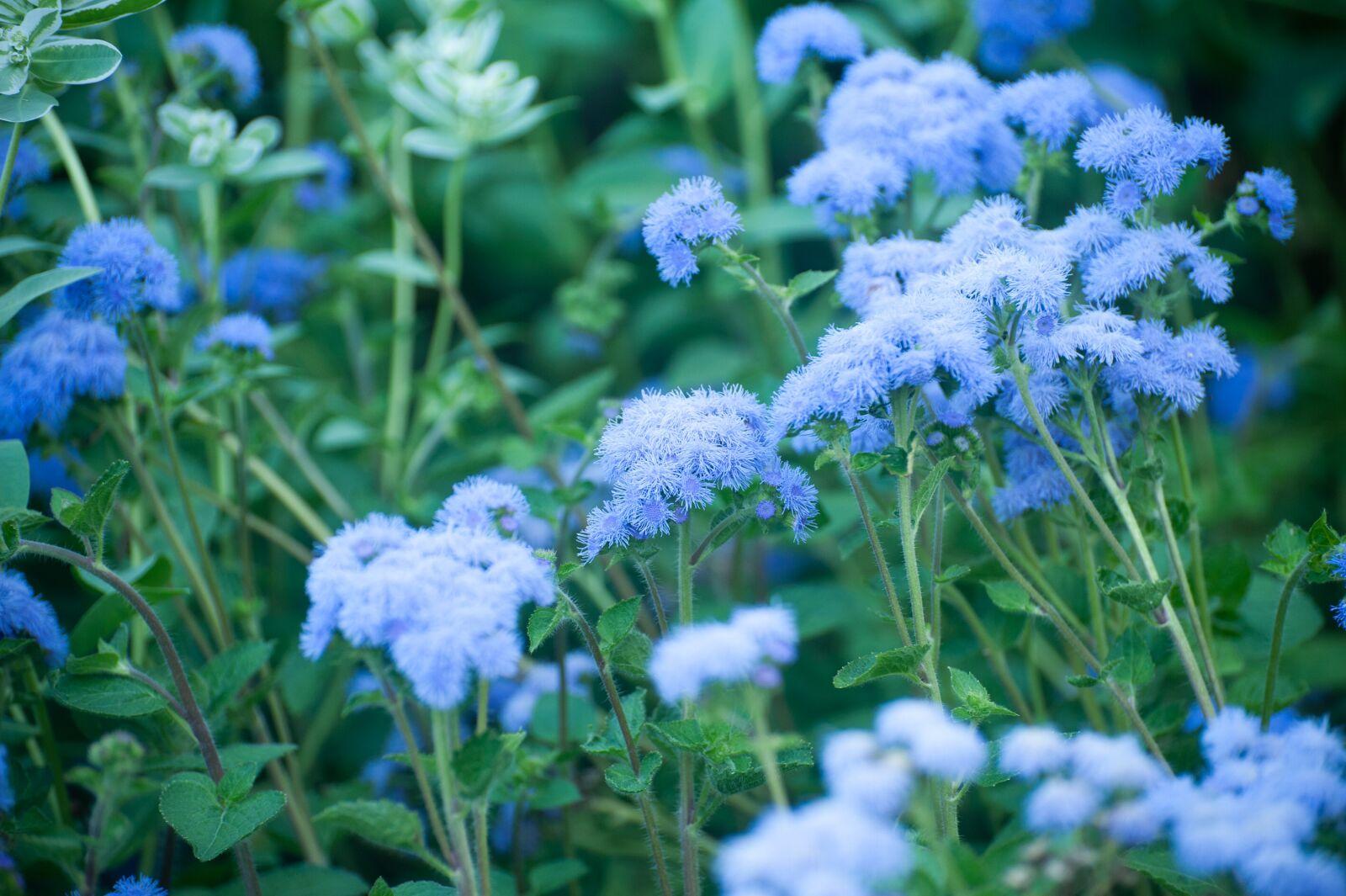 "Nikon D700 sample photo. ""Blue, green, flower"" photography"