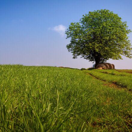 tree, landscape, sky, Canon EOS 550D