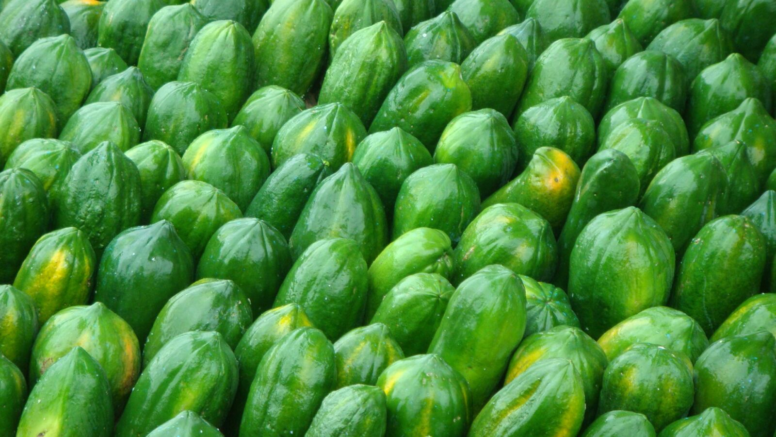 "Sony DSC-T300 sample photo. ""Fruit, papaya, harvest"" photography"