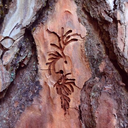 wood, wood carving, nature, Sony DSC-WX150