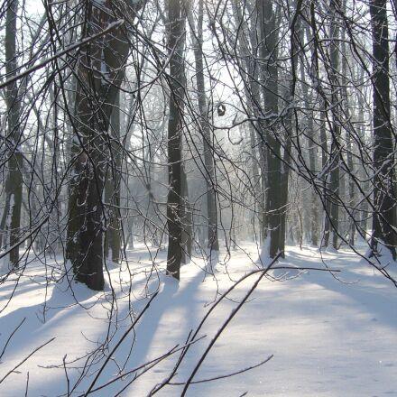 park, winter, tree, Panasonic DMC-LS2