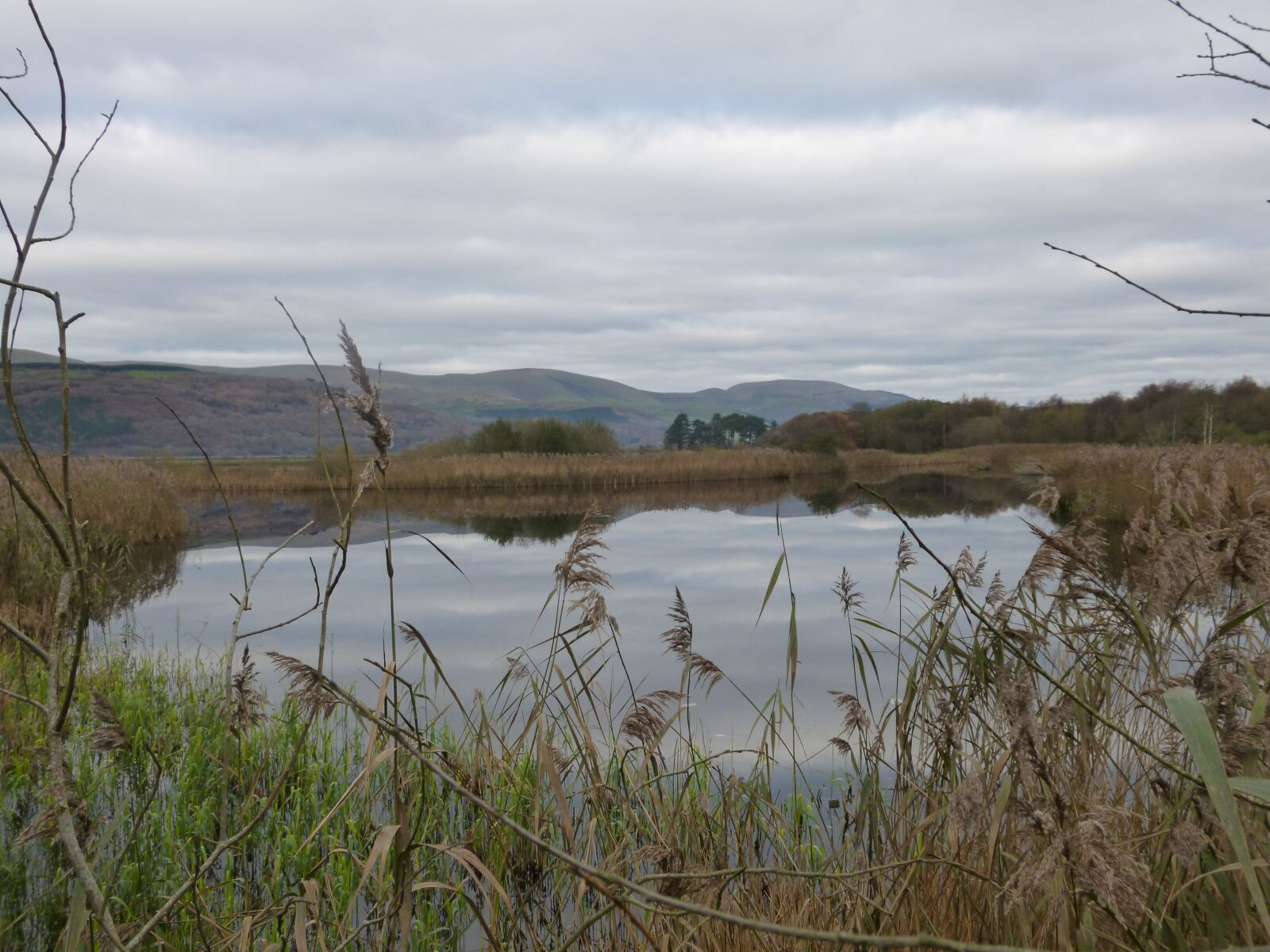 "Panasonic DMC-SZ3 sample photo. ""Green, marsh, nature, winter"" photography"