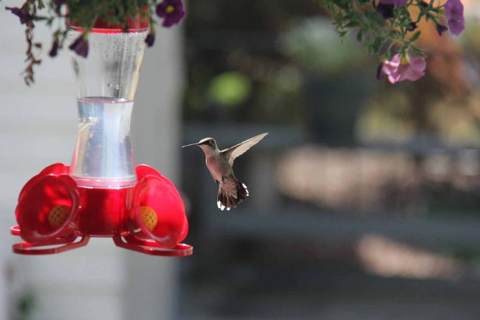 "Canon EOS 60D sample photo. ""Bird, hummingbird, wings"" photography"