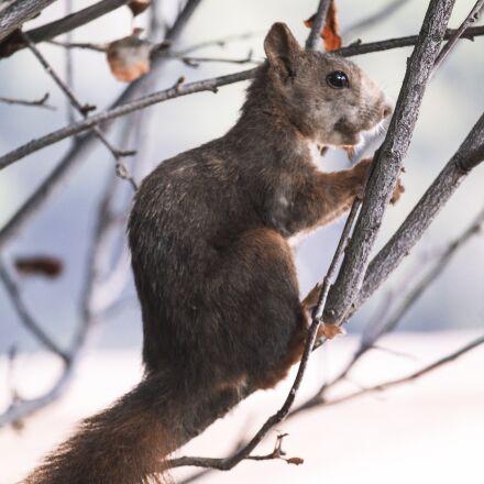 squirrel, nature, malaga, Canon EOS 1100D
