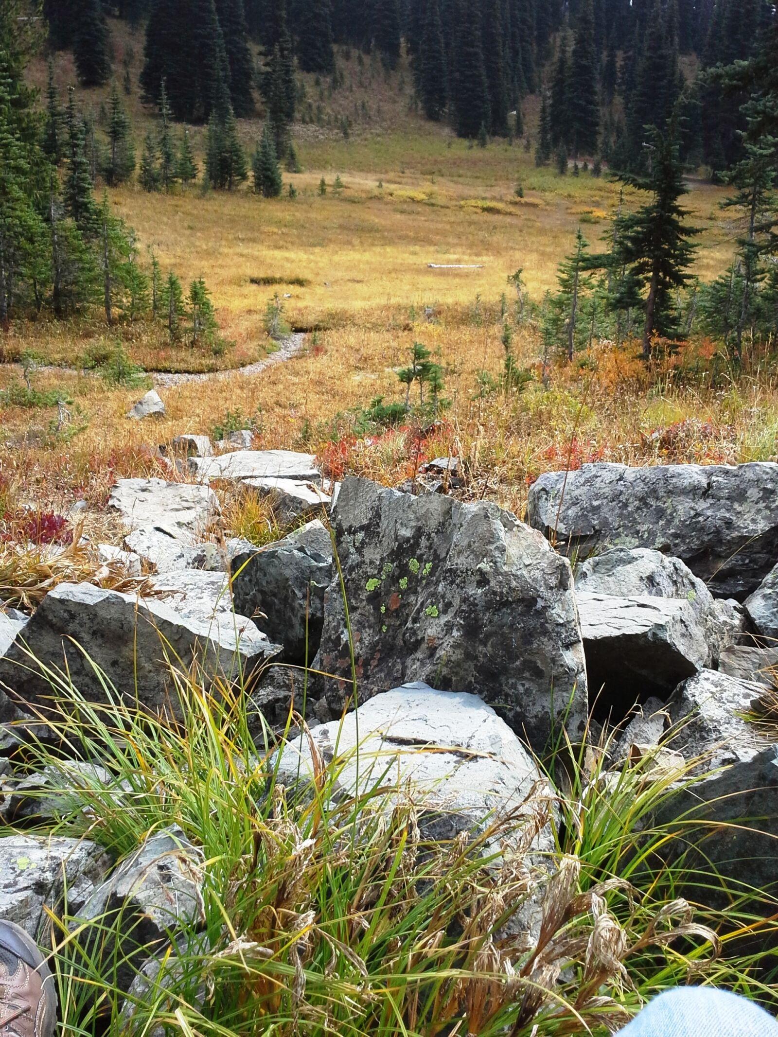 alpine meadow, cascade mountains