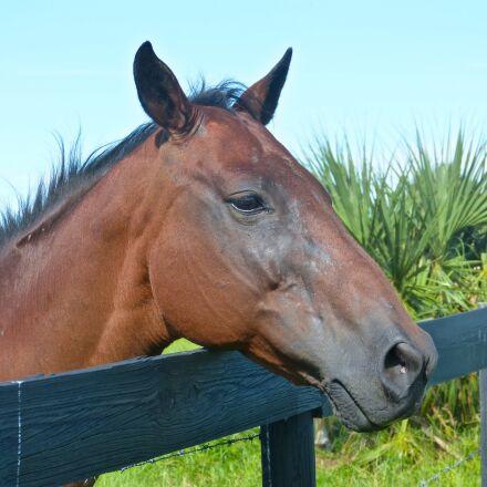 horse, brown horse, horse, Panasonic DMC-FZ60
