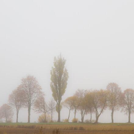 autumn, field, fog, trees, Canon EOS 7D