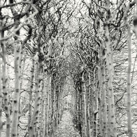 away, trees, empty, Canon EOS-1DS MARK III