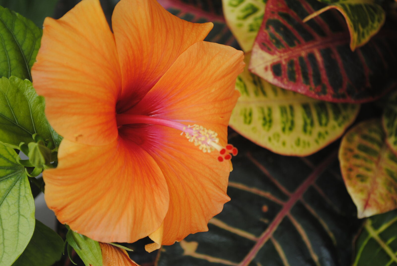 "Nikon D3000 sample photo. ""Beautiful, flowers, greenery, relaxing"" photography"