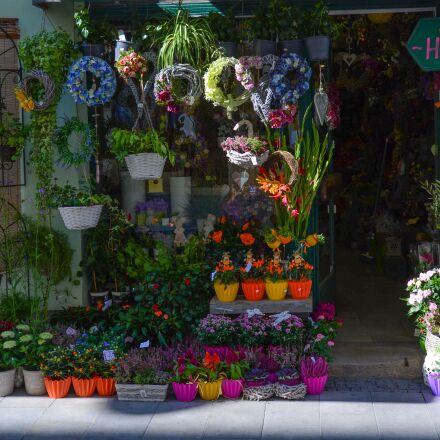 flower, love, nature, Nikon D600