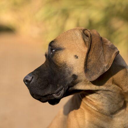doggy, animal, cute, RICOH PENTAX 645Z