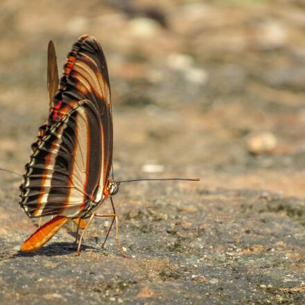 insect, butterfly, colorful butterfly, Canon POWERSHOT SX520 HS