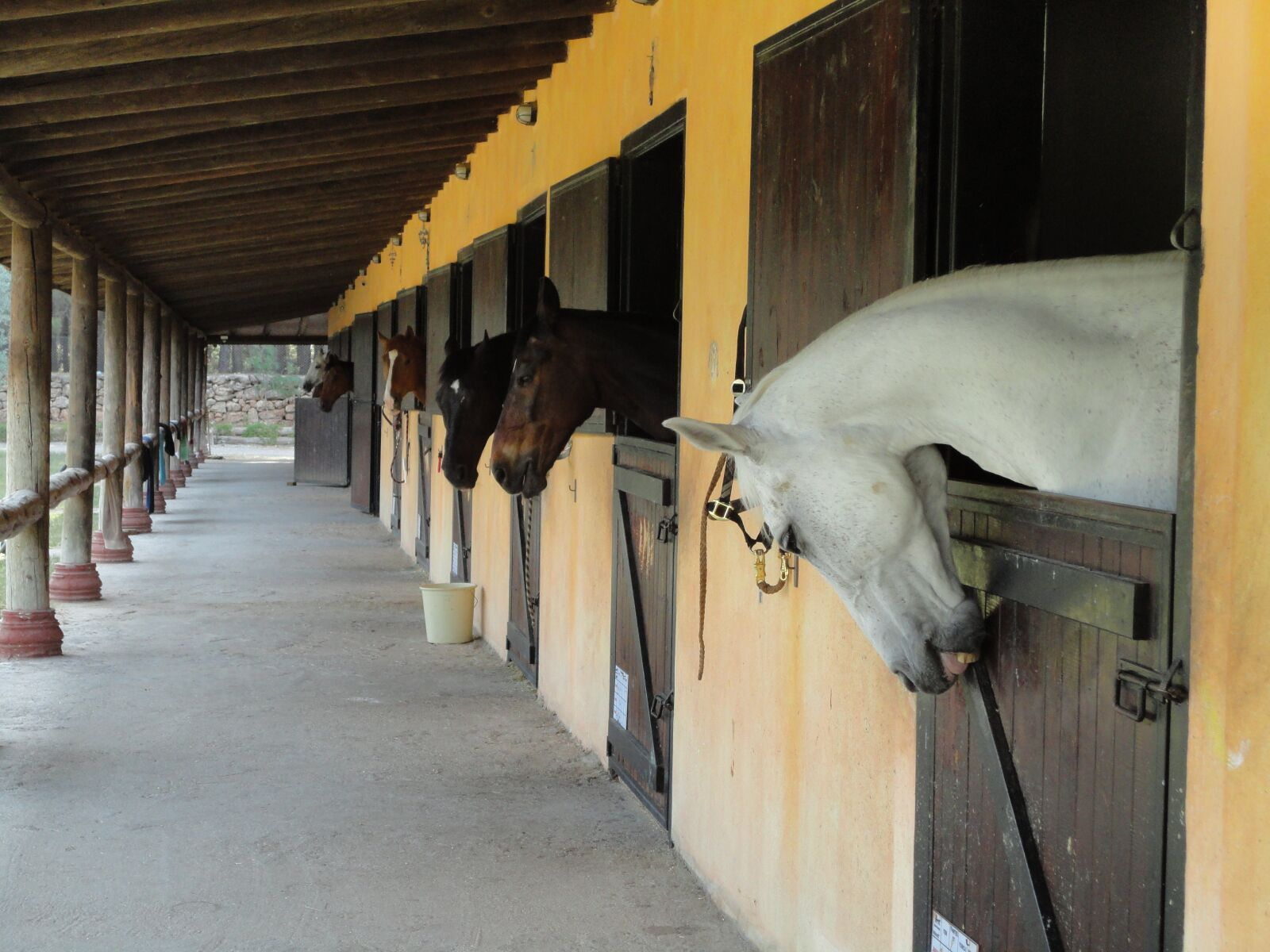 "Sony DSC-W350 sample photo. ""The horses are, barn"" photography"