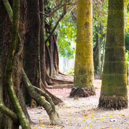 natural, tree, nature, Canon EOS KISS X3