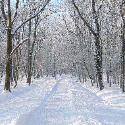 winter, snow, park, Panasonic DMC-LS2