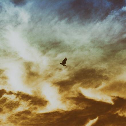 bird, flying, on, cloudy, Nikon D5200