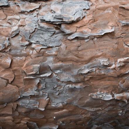 bark, brown, close, up, Canon EOS 700D