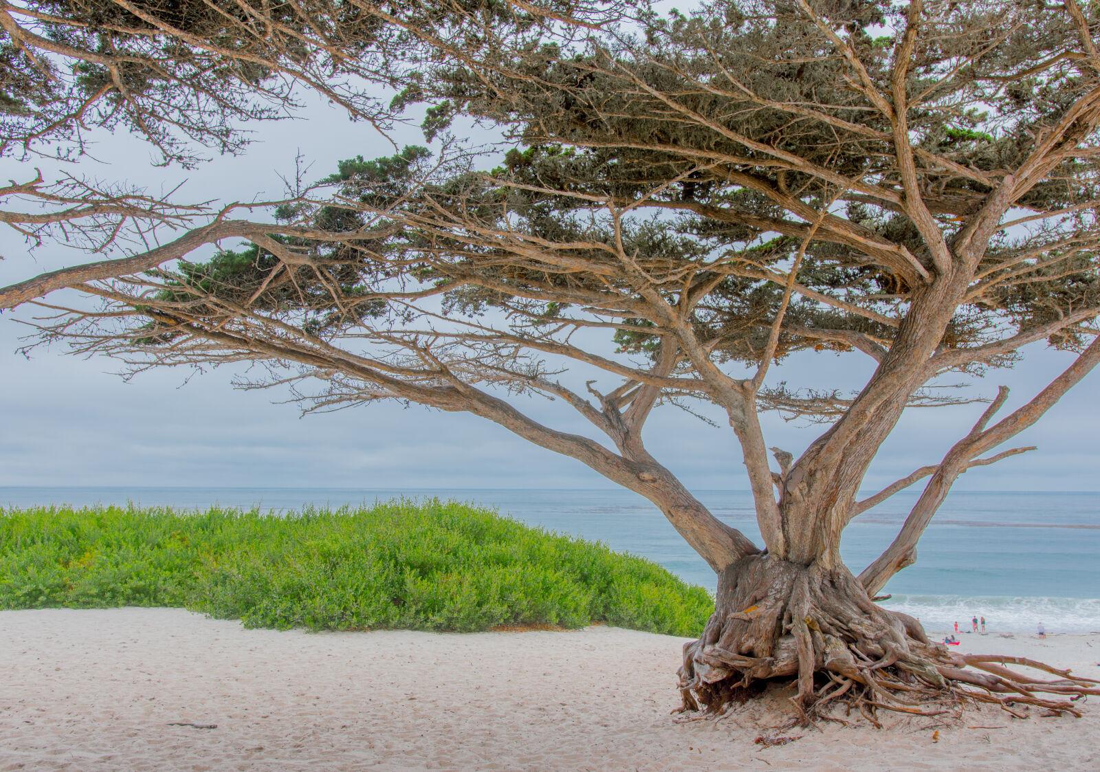 "Sigma 18-35mm F1.8 DC HSM Art sample photo. ""Beach, neature, ocean, tree"" photography"