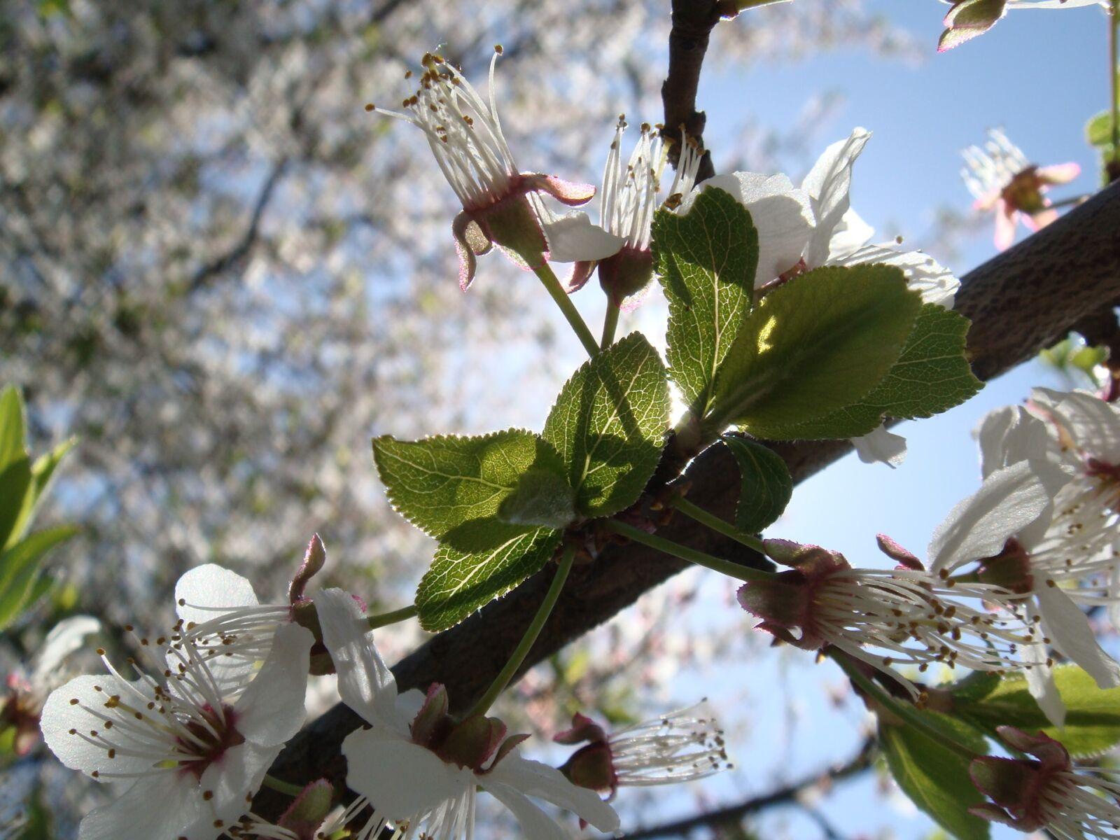 flower, tree, branch