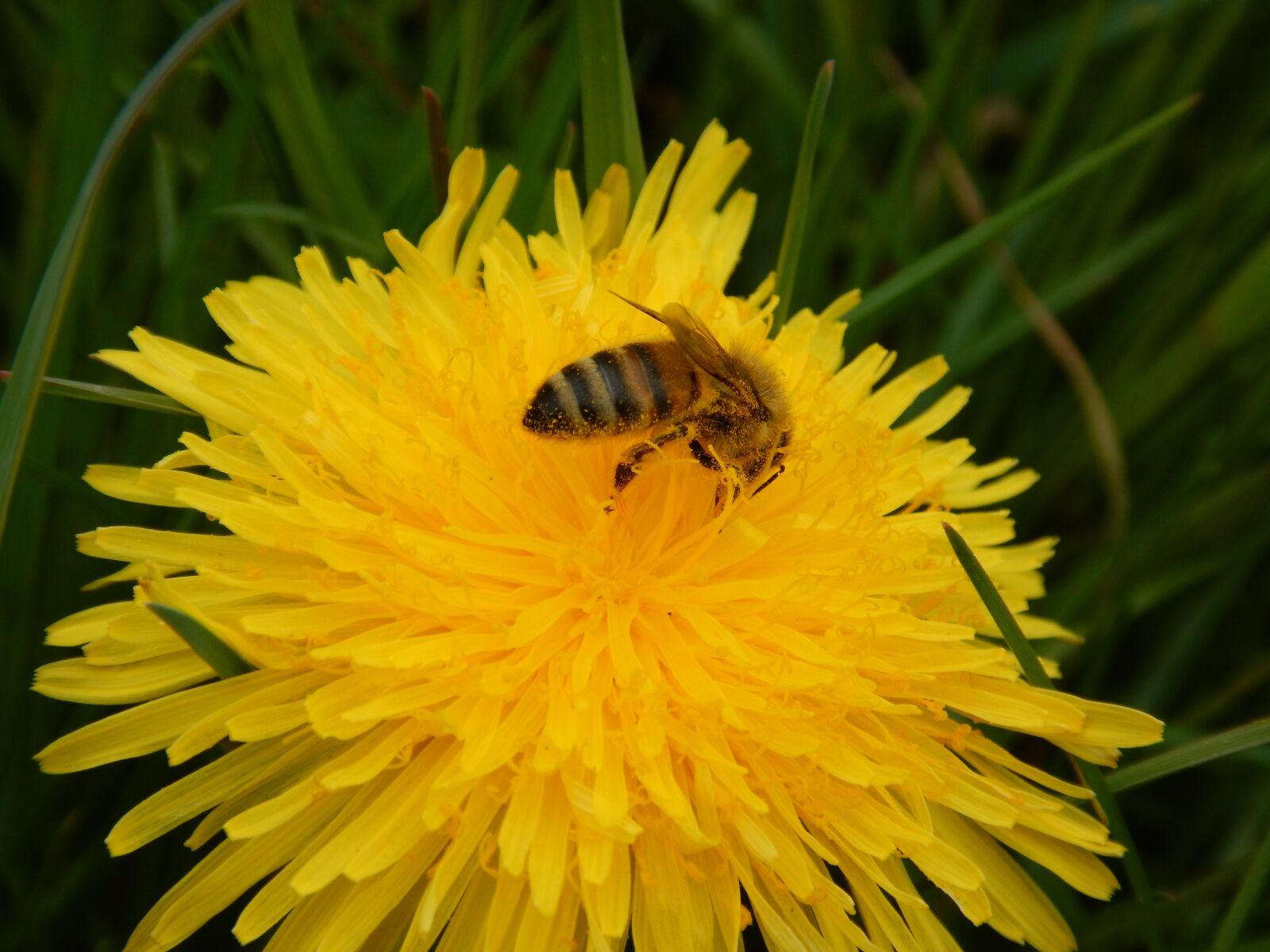 "Nikon Coolpix AW120 sample photo. ""Bee, spring, yellow"" photography"