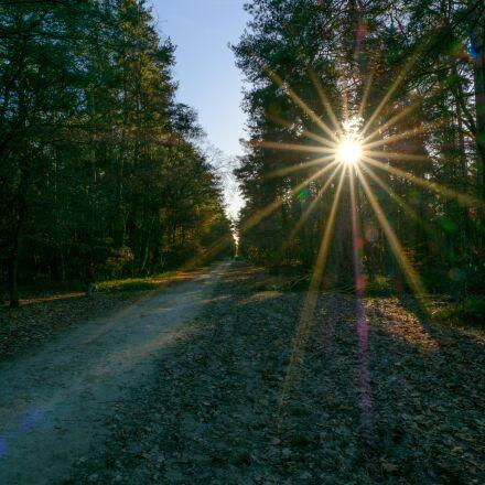 sun, rays, light, Fujifilm X-T2