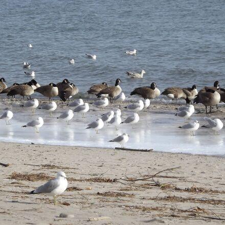 birds, the seagulls, beach, Fujifilm FinePix S3400