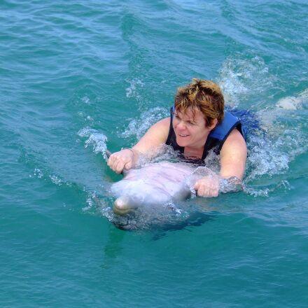 dolphins, swimming, sea, Fujifilm FinePix S5200