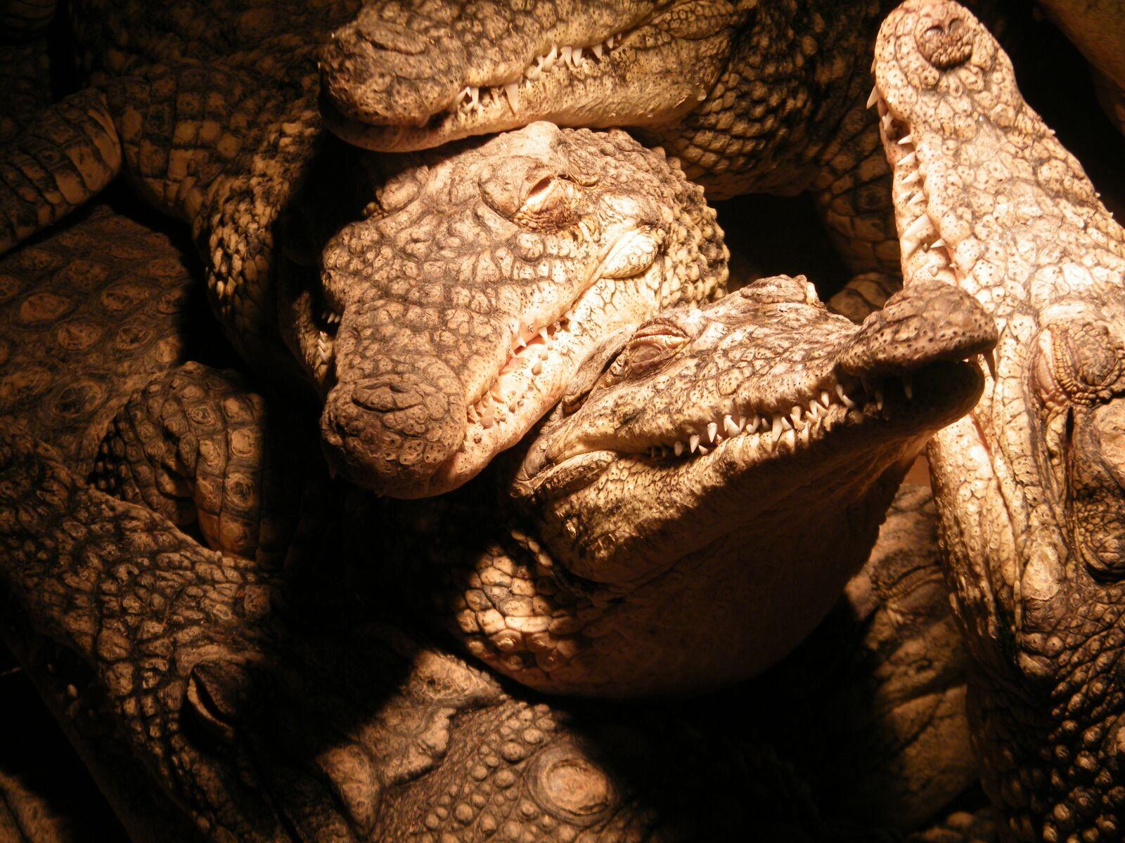 "Fujifilm FinePix S2000HD sample photo. ""Crocodiles, dinosaur, group"" photography"