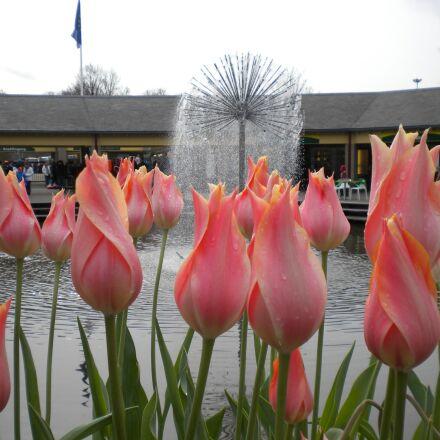 tulips, flowers, fountain, Nikon COOLPIX S220